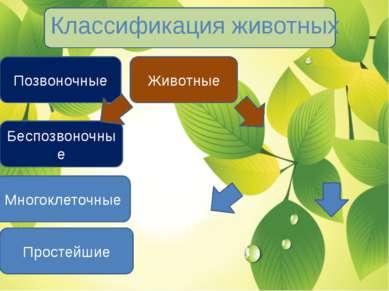 Классификация животных Животные Простейшие Многоклеточные Беспозвоночные Позв...