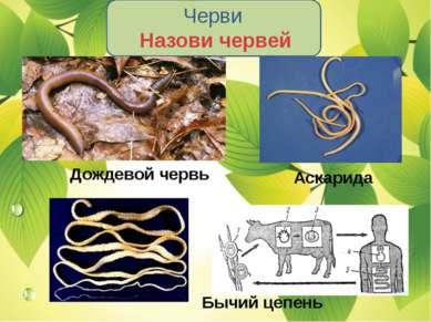 Черви Назови червей Дождевой червь Аскарида Бычий цепень