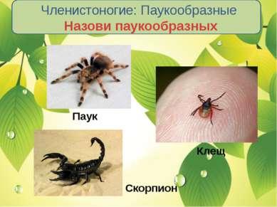 Членистоногие: Паукообразные Назови паукообразных Паук Клещ Скорпион