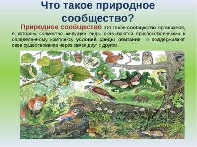 Что такое природное сообщество? Природное сообщество это такое сообщество орг...