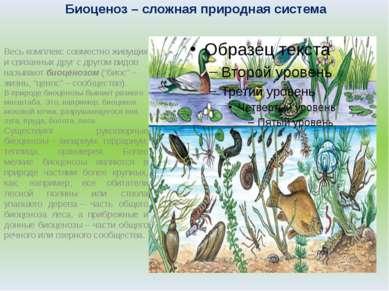 Биоценоз– сложная природная система Весь комплекс совместно живущих и связан...