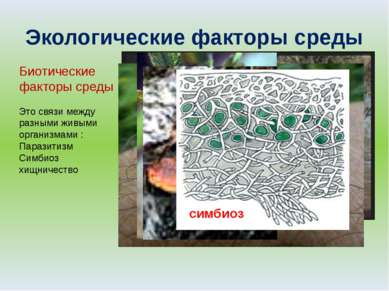 Экологические факторы среды Биотические факторы среды Это связи между разными...