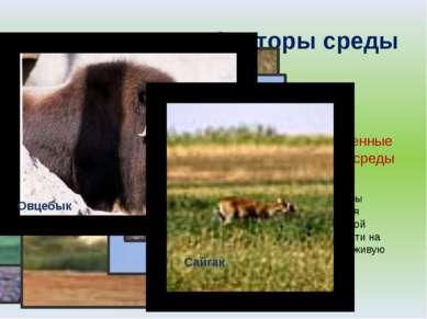 Экологические факторы среды Абиотические факторы среды Биотические факторы ср...
