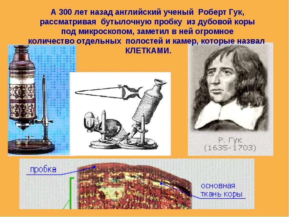А 300 лет назад английский ученый Роберт Гук, рассматривая бутылочную пробку ...