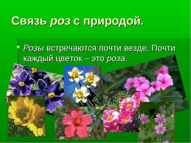 Связь роз с природой. Розы встречаются почти везде. Почти каждый цветок – это...