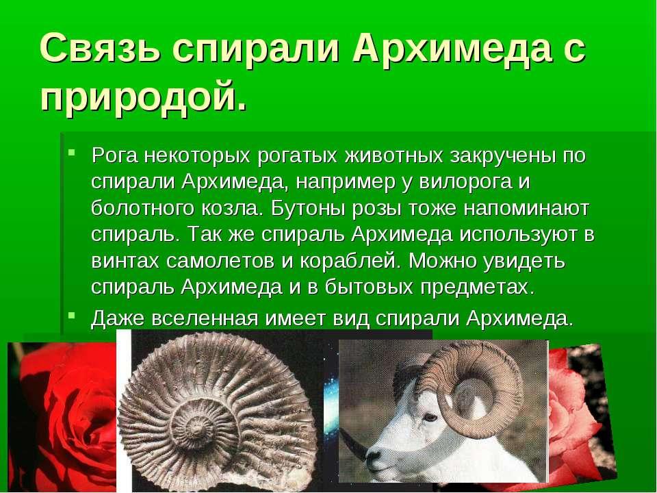 Связь спирали Архимеда с природой. Рога некоторых рогатых животных закручены ...