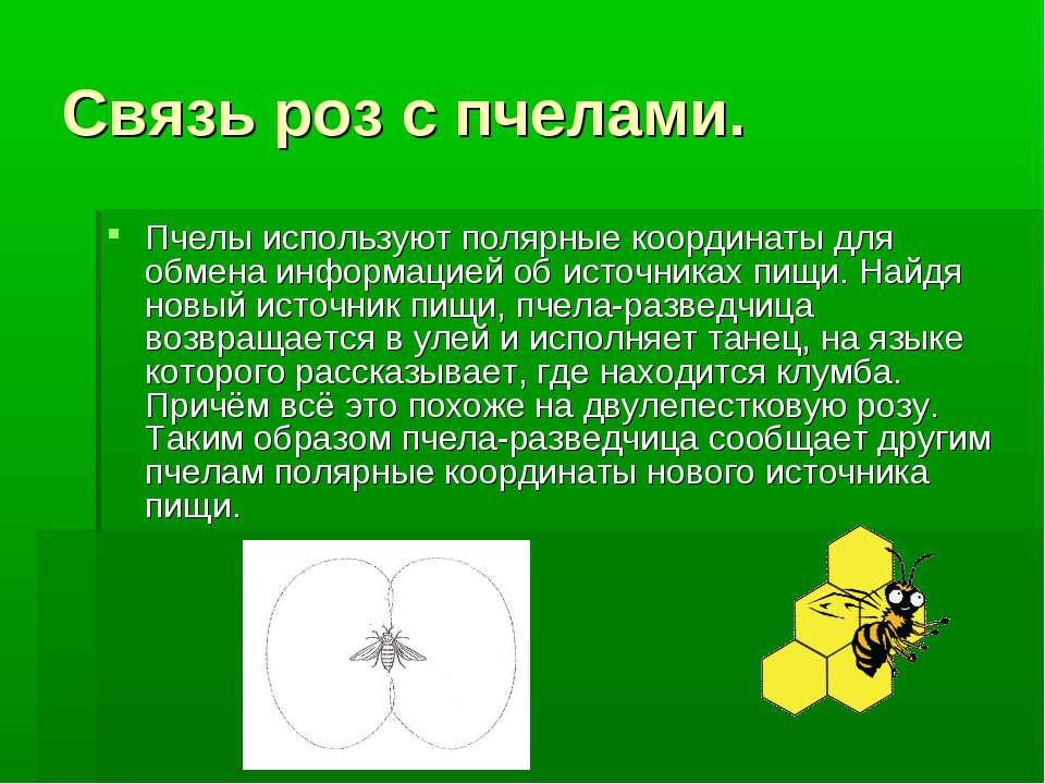 Связь роз с пчелами. Пчелы используют полярные координаты для обмена информац...