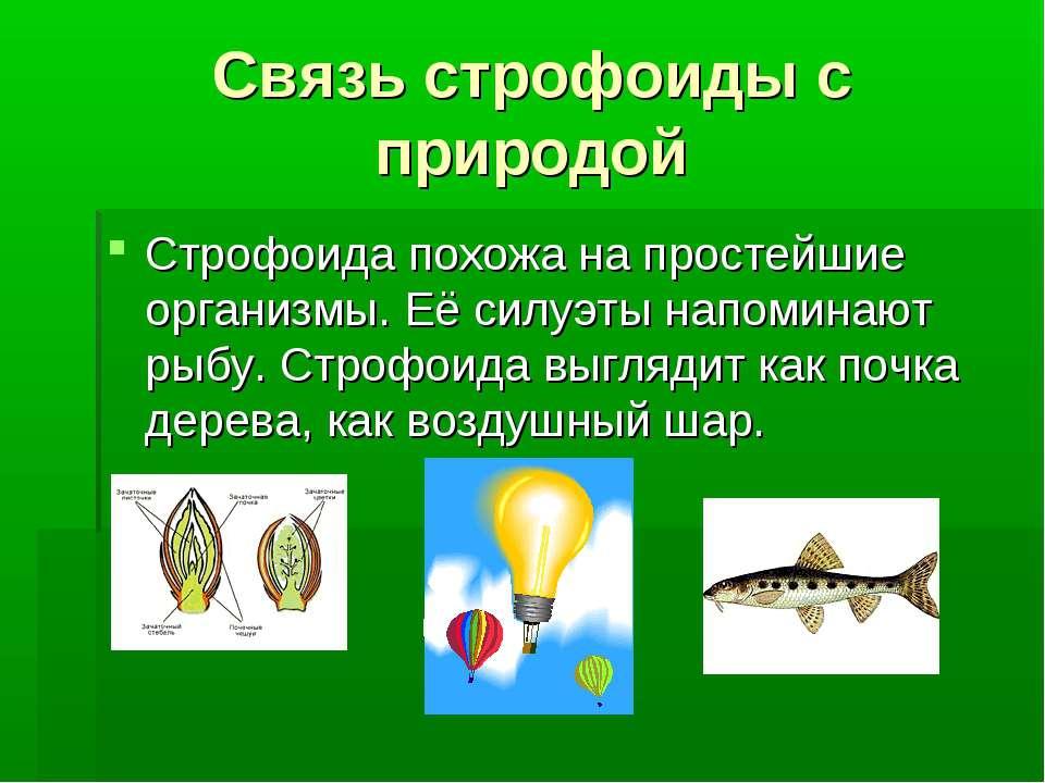 Связь строфоиды с природой Строфоида похожа на простейшие организмы. Её силуэ...