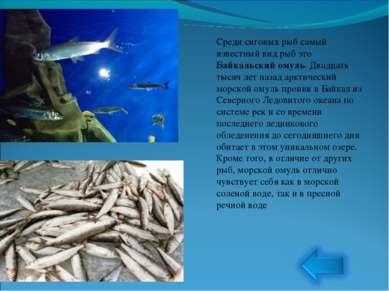 Среди сиговых рыб самый известный вид рыб это Байкальский омуль. Двадцать тыс...