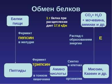 Обмен белков Белки пищи Пептиды Амино кислоты Миозин, Казеин и др. СО2+ Н2О +...