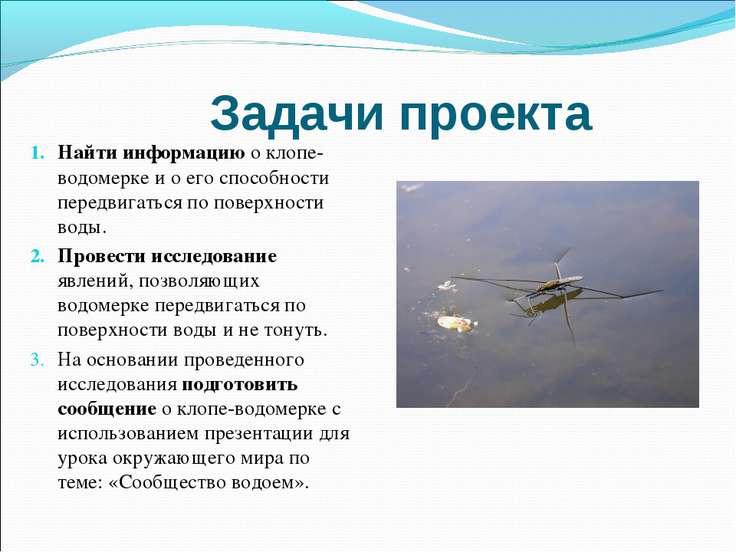Задачи проекта Найти информацию о клопе-водомерке и о его способности передви...