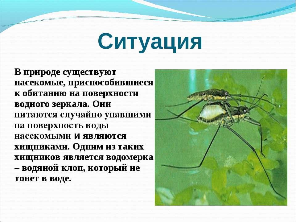 Ситуация В природе существуют насекомые, приспособившиеся к обитанию на повер...