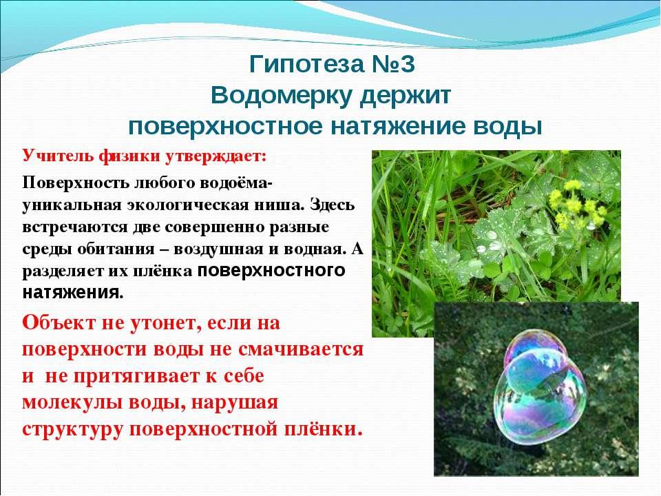 Гипотеза №3 Водомерку держит поверхностное натяжение воды Учитель физики утве...