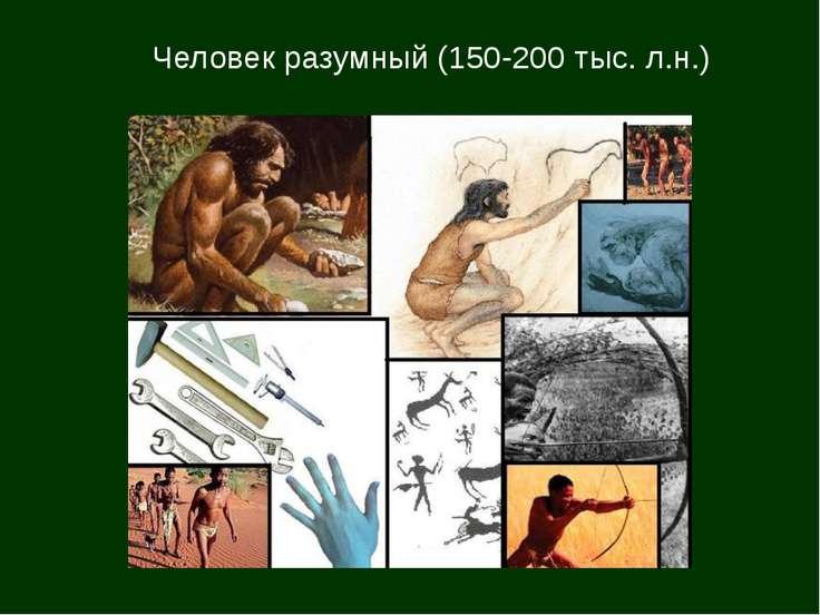 Человек разумный (150-200 тыс. л.н.)