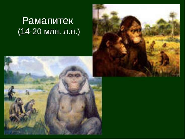 Рамапитек (14-20 млн. л.н.)