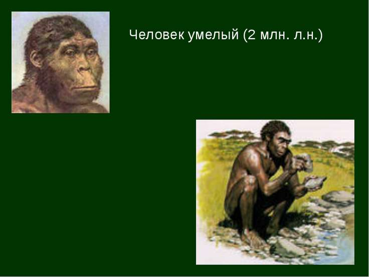 Человек умелый (2 млн. л.н.)