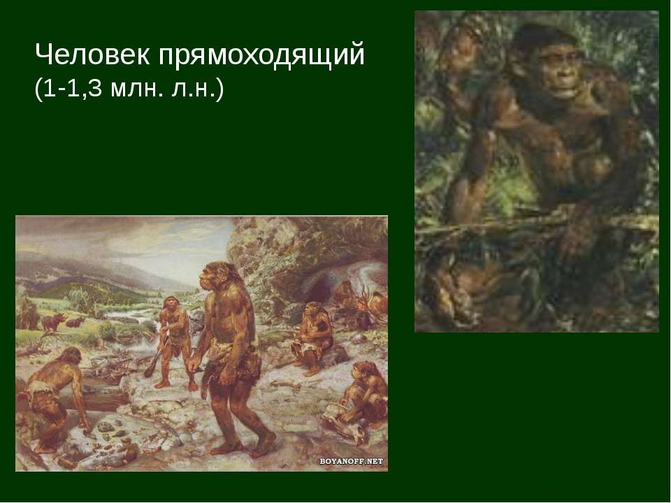 Человек прямоходящий (1-1,3 млн. л.н.)