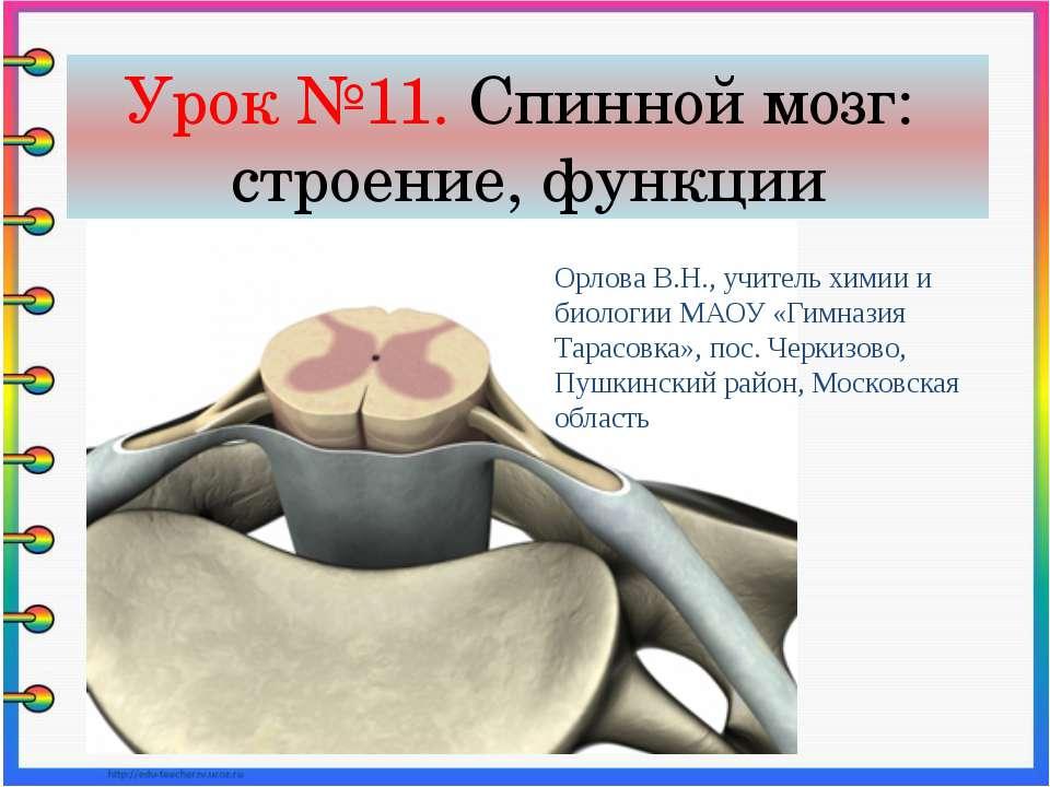 Урок №11. Спинной мозг: строение, функции Орлова В.Н., учитель химии и биолог...