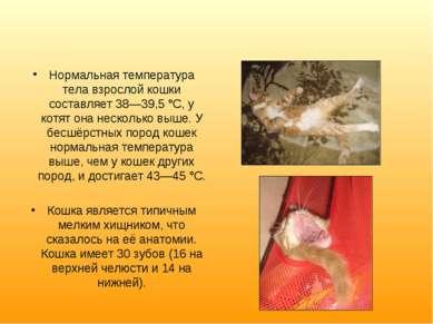 Нормальная температура тела взрослой кошки составляет 38—39,5 °C, у котят она...