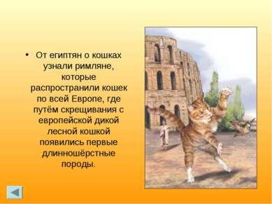 От египтян о кошках узнали римляне, которые распространили кошек по всей Евро...