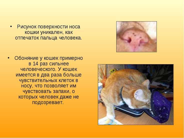 Рисунок поверхности носа кошки уникален, как отпечаток пальца человека. Обоня...