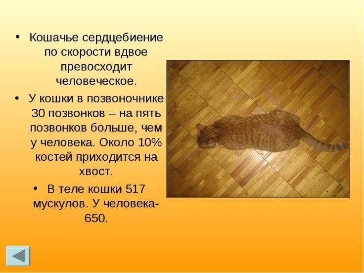 Кошачье сердцебиение по скорости вдвое превосходит человеческое. У кошки в по...
