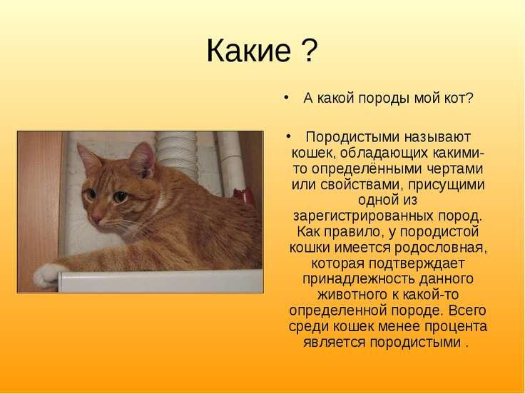 Какие ? А какой породы мой кот? Породистыми называют кошек, обладающих какими...