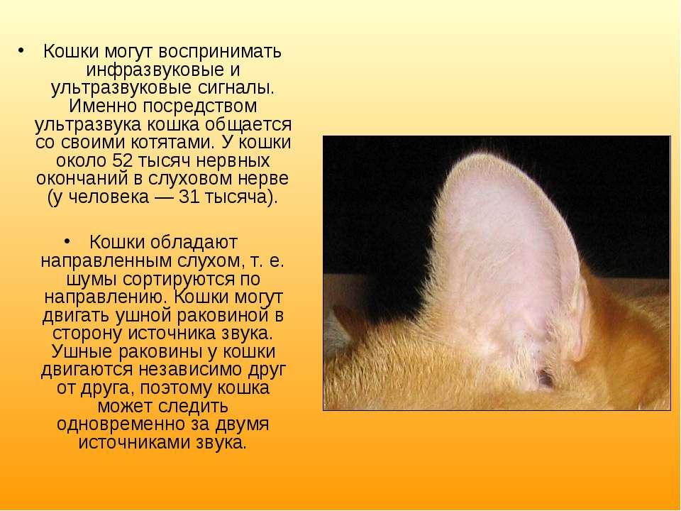 Кошки могут воспринимать инфразвуковые и ультразвуковые сигналы. Именно посре...