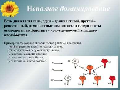 Неполное доминирование Есть два аллеля гена, один – доминантный, другой – рец...