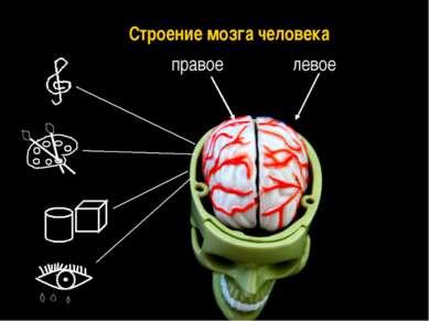 правое левое Строение мозга человека