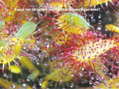 Какой тип питания у этого удивительного растения?