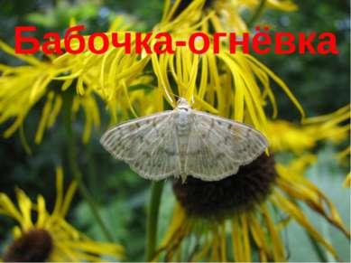Бабочка-огнёвка