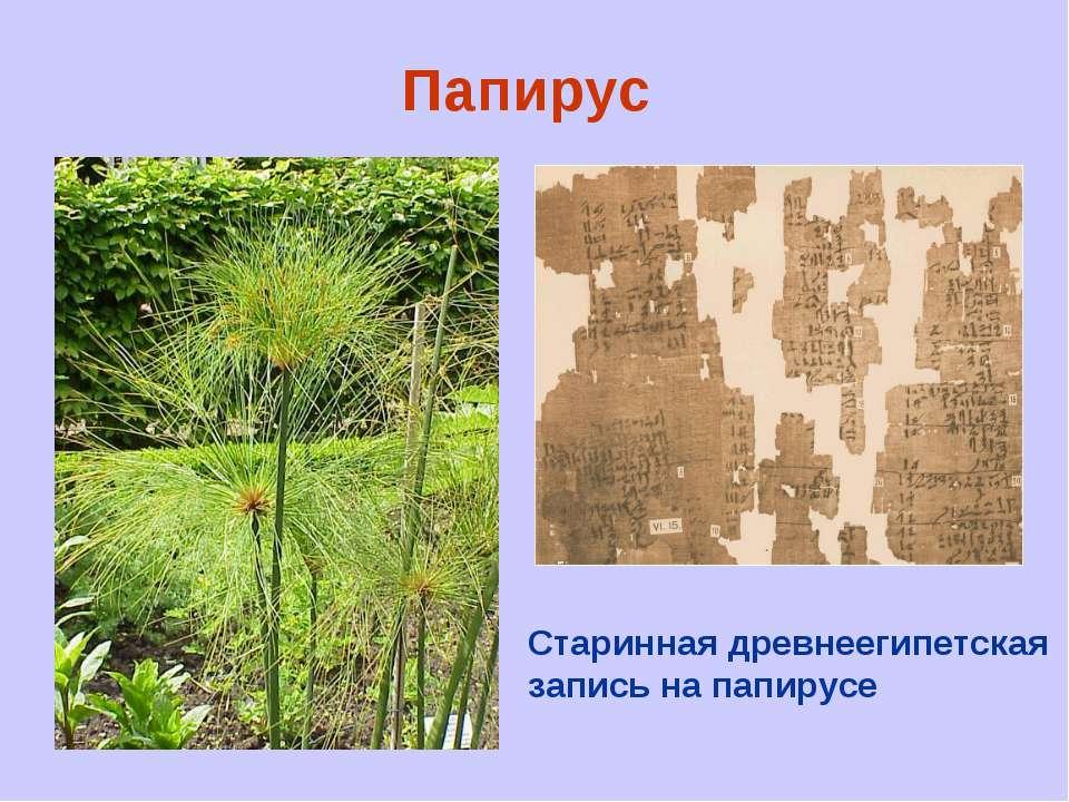 Папирус Старинная древнеегипетская запись на папирусе