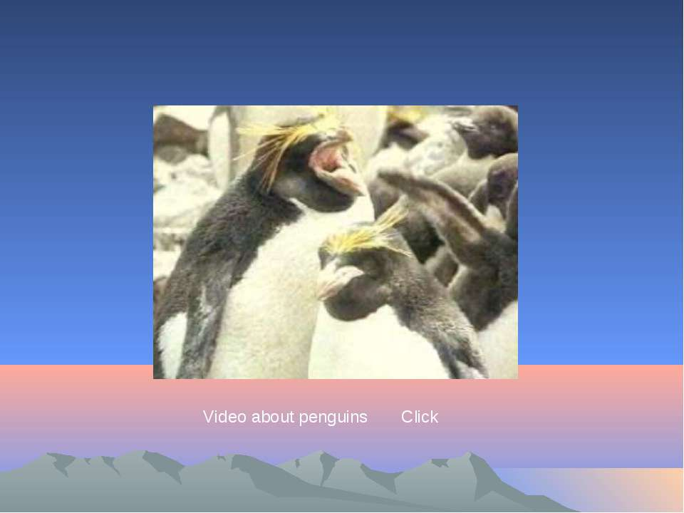 Video about penguins Click