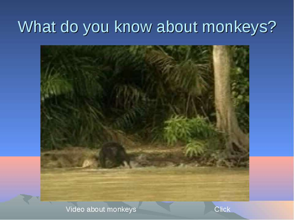 What do you know about monkeys? Video about monkeys Click
