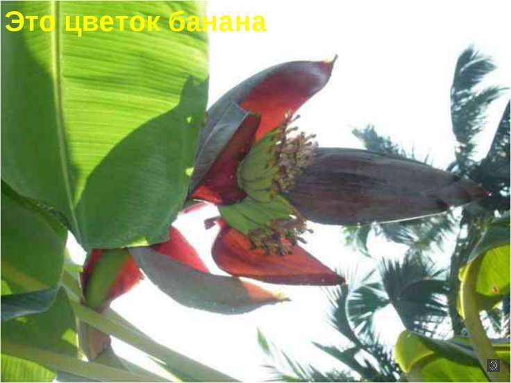 Это цветок банана