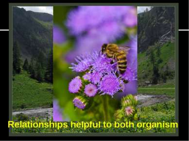 Relationships helpful to both organism