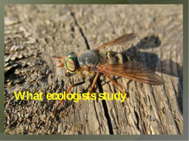 What ecologists study
