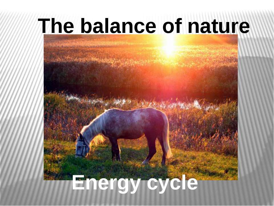 Energy cycle The balance of nature