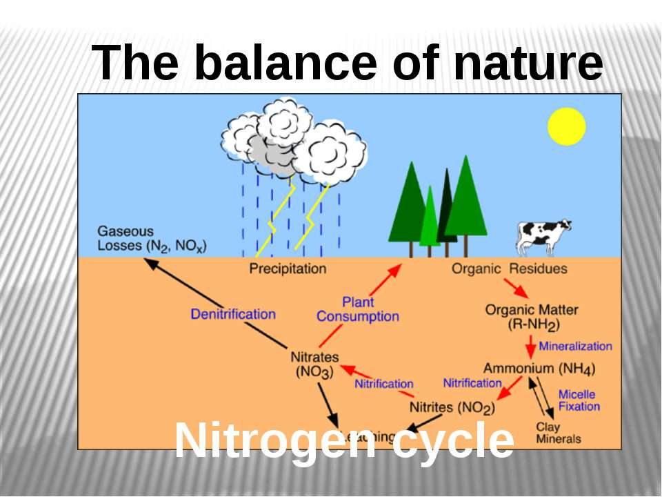 Nitrogen cycle The balance of nature