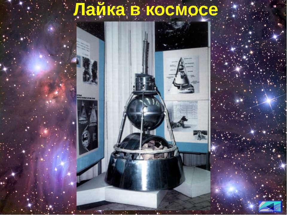 Лайка в космосе