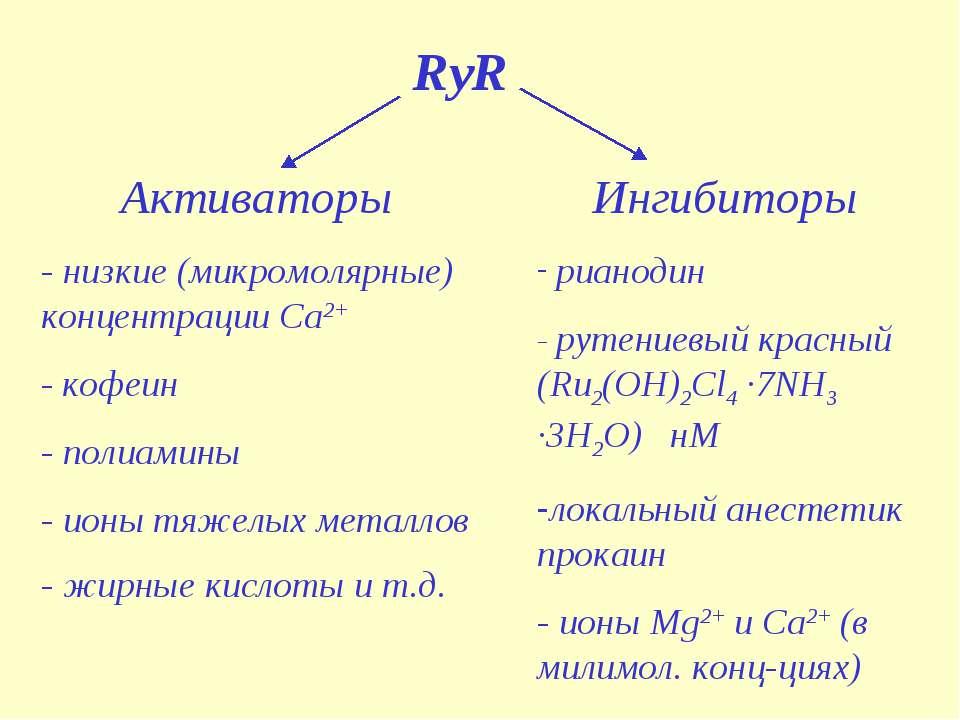 RyR Активаторы - низкие (микромолярные) концентрации Са2+ - кофеин - полиамин...