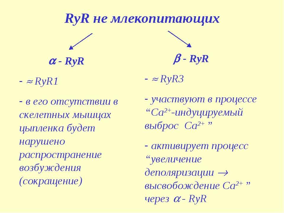 RyR не млекопитающих - RyR RyR1 в его отсутствии в скелетных мышцах цыпленка ...