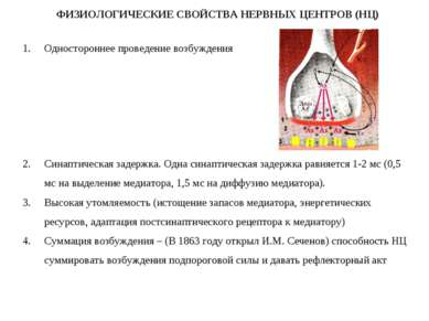 ФИЗИОЛОГИЧЕСКИЕ СВОЙСТВА НЕРВНЫХ ЦЕНТРОВ (НЦ) Одностороннее проведение возбуж...