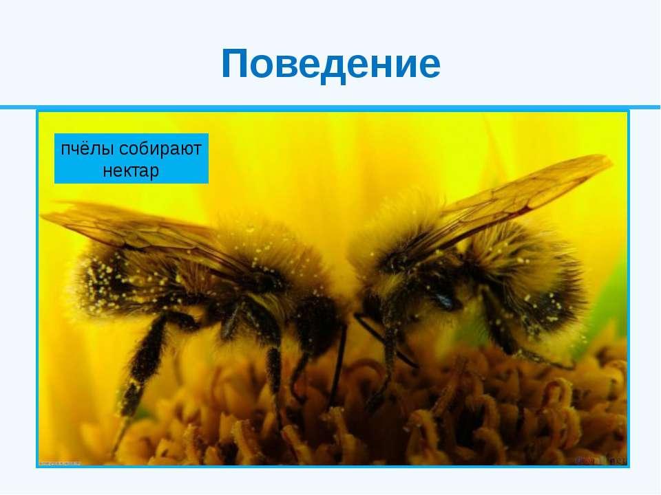 Поведение Для насекомых характерно чрезвычайно сложные формы поведения. Это р...