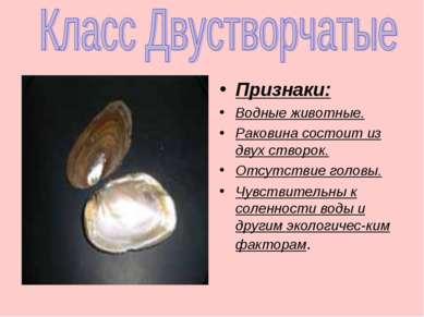 Признаки: Водные животные. Раковина состоит из двух створок. Отсутствие голов...