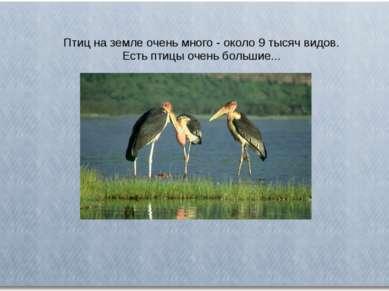 Птиц на земле очень много - около 9 тысяч видов. Есть птицы очень большие...