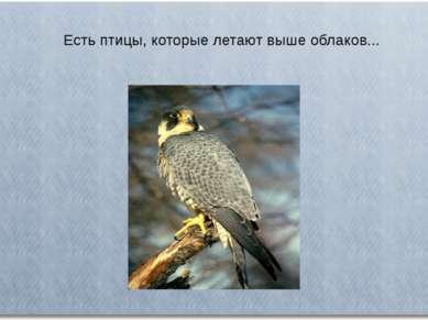 Есть птицы, которые летают выше облаков...