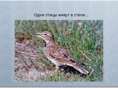 Одни птицы живут в степи...