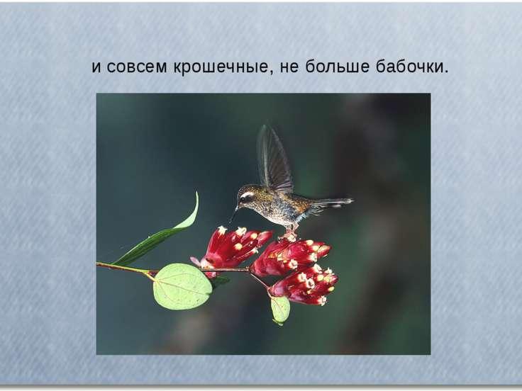 и совсем крошечные, не больше бабочки.